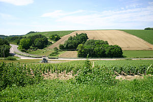 Vineyards in the Burgundy wine region of Chablis